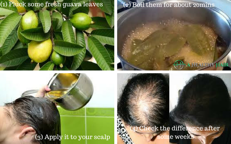 guava leaves can cause hair growth