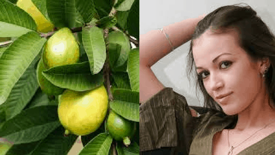 guava-leaves-can-cause-hair-to-regrow