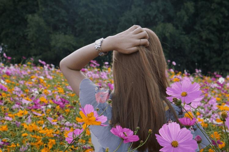 benefits of sunflower oil for hair